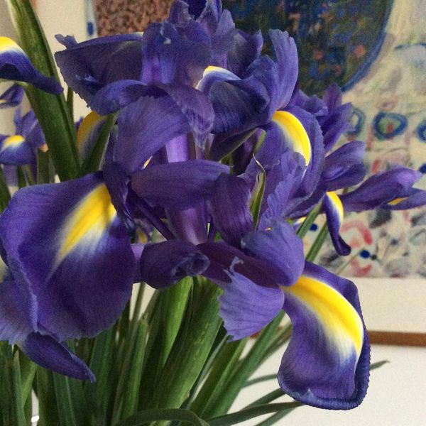 Ice Cubes and Irises
